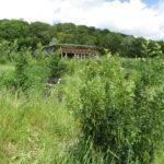 halmhus under opførsel på Svanholm Permakultur Landbrug